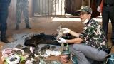 40 мъртви тигърчета бяха открити във фризер в будистки храм в Тайланд