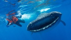Замърсяването с пластмаси на океана - огромна заплаха за китове, акули и скатове
