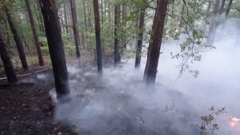 Пожар изпепели 30 дка борова гора край Варна