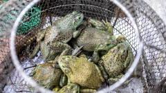 Ухан забрани консумирането на диви животни