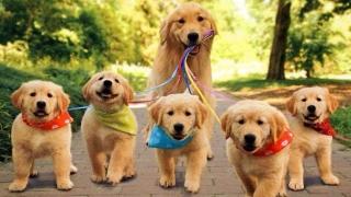 Кучетата различават думи и интонация