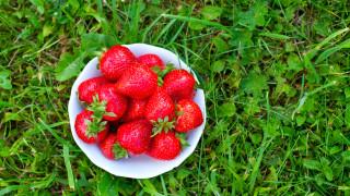 Без български и румънски берачи ягодите на Острова поскъпват с до 50%