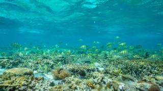 Големият бариерен риф в Австралия загива