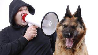 Защо не бива да крещим на кучето си