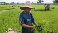 Азия не може да се изхранва сама. И за да промени това са ѝ нужни $800 милиарда