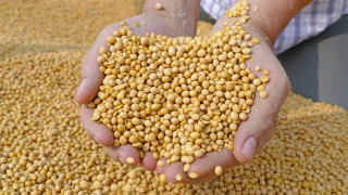 Китай замрази покупките на соя от САЩ