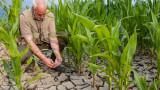 1 млн. долара в минута: Земеделските субсидии разрушават света