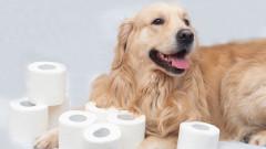 Как всички се шегуват с кучетата и котките си