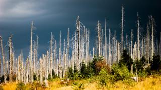 Над половината ендемични дървета в Европа са застрашени от изчезване