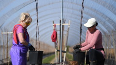 Британците не обичат земеделска работа, чакат берачи от Източна Европа