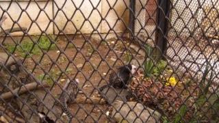 Животът на животните в зоопарка преди Коледа