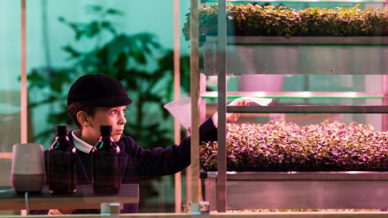 IKEA създаде домашна градина за целогодишно отглеждане на зеленчуци