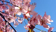 Настъпи астрономическата пролет