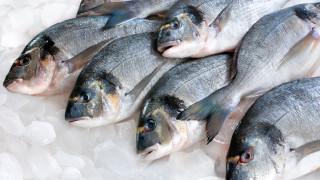 Климатичните промени може да доведат до поскъпване на рибата
