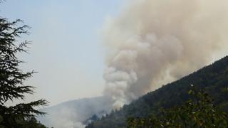 Остават три активни огнища на пожара в Кресненското дефиле
