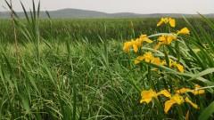 Планът за възстановяване нямал амбиция за биоразнообразието