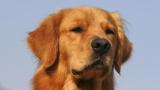 Куче даде живота си, но спаси 7 души изпод развалините в Еквадор