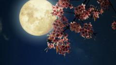 Принципи на лунното градинарство