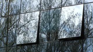 Стъклените фасади и опасността за птиците