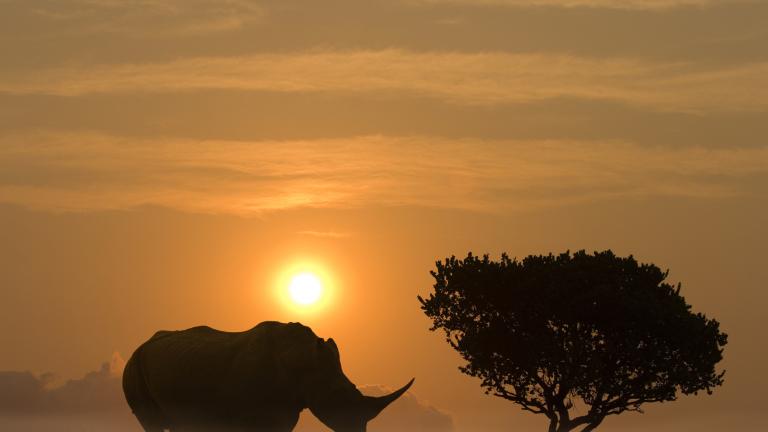 Диви бозайници застрашени от изчезване заради човешкия апетит към месото