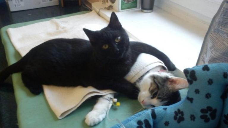 Коте-фелдшер работи в полски приют
