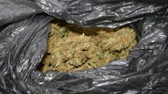 Разследват контрабанда на марихуана с участие на косовски граждани в Кюстендил