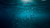 Рибата, количеството й в Световния океан и един притеснителен доклад