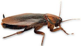 Нашествие от хлебарки в Пловдив