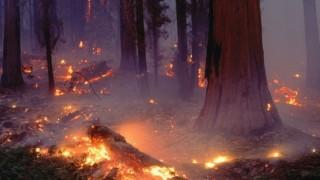 Лесничеи: Умишлен палеж е предизвикал пожара над Карлово