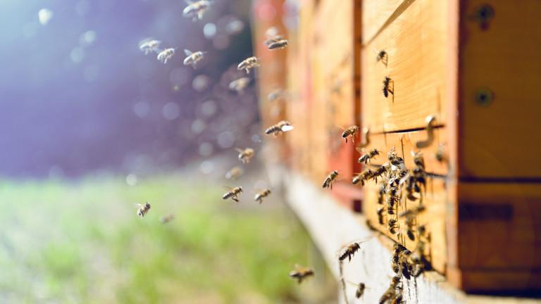 Пълна забрана на пестицидите, които убиват пчелите - за това