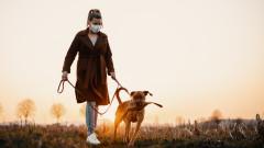 Ще ваксинираме ли и домашните любимци срещу COVID-19