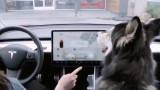 """Tesla пуска """"кучешки режим"""" за колите си"""