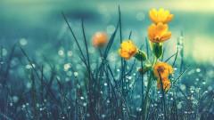 Редуват се слънце и дъжд