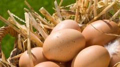Снасят ли по-вкусни яйца щастливите кокошки?