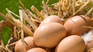 Пръскали кокошките против паразити, затова и яйцата у нас са с фипронил