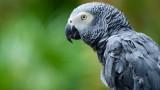 Amazon, Alexa, папагалът Роко и стотици поръчки онлайн