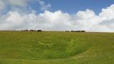 Австралийската ферма с размерите на Ирландия си търси нов собственик