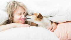 Рисковете на кучешките целувки