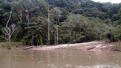 Според последни проучвания Амазонка е най-дългата река в света