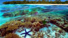 Откриха непокътнати части от Големия бариерен риф