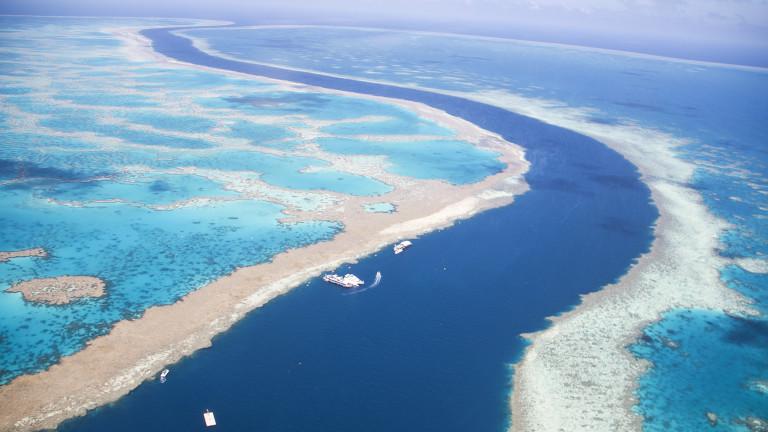 Големият бариерен риф - трети масов мор на корали за пет години