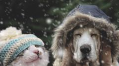 Специални грижи за домашните любимци през зимата