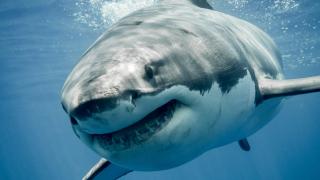 Акула уби тийнейджър