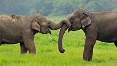 Шри Ланка най-после ще защити слоновете