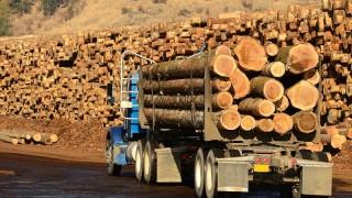 Русия заплаши да забрани износа на дървесина за Китай