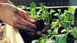 Как да си направим зеленчукова градина у дома