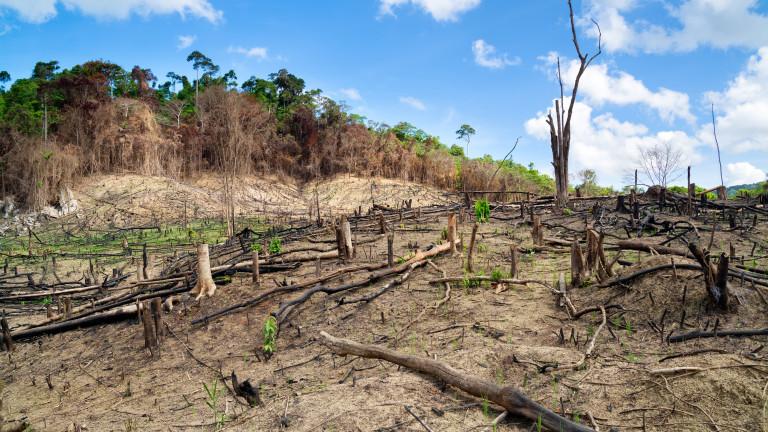 Светът не успява да постигне нито една цел за спиране унищожаването на природата