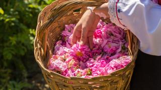 Масови фалити грозят розопроизводителите заради коронавируса