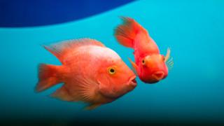 """Как хората пречат на рибите да се """"чуват"""""""