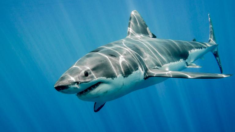 Защо акулите не се разболяват от рак